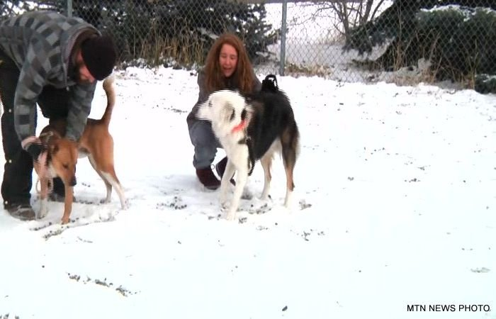Protecting Your Pets During The Winter Kpax Com
